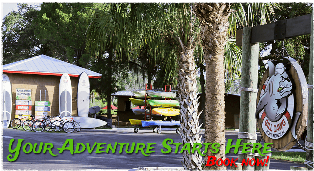 Gill Dawg Marina Tours Boats Rentals Kayak Stand Up Paddleboard Port Richey Florida Tampa