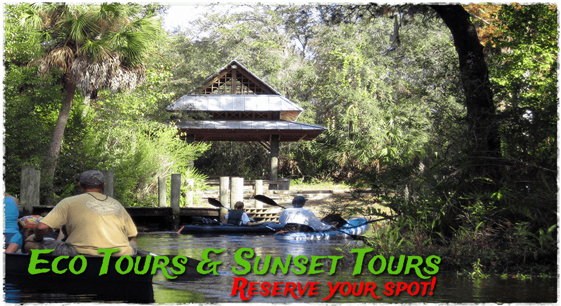 Gill Dawg Eco Tours Kayak Paddleboard SUP Port Richey Florida Tampa